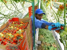 Desempleados con opciones casi nulas de trabajo fuera de Honduras